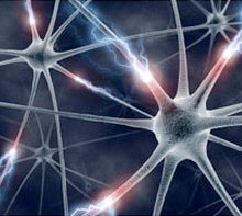 Neurons picture